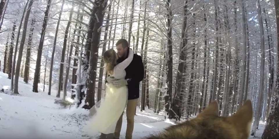 Video: perra graba la boda de sus dueños - Foto de YouTube