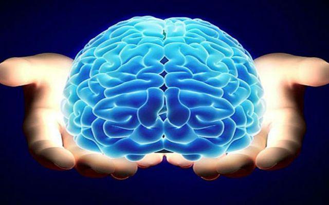 Científicos revelan la edad a la que madura el cerebro humano - CEREBRO