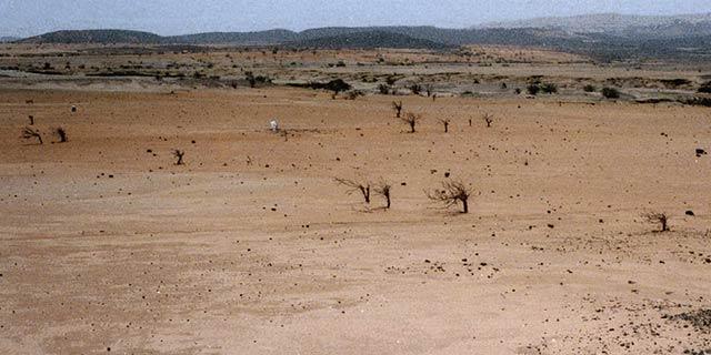 Padecerán crisis alimentaria 60 millones de personas por cambio climático: ONU - Foto de ONU.