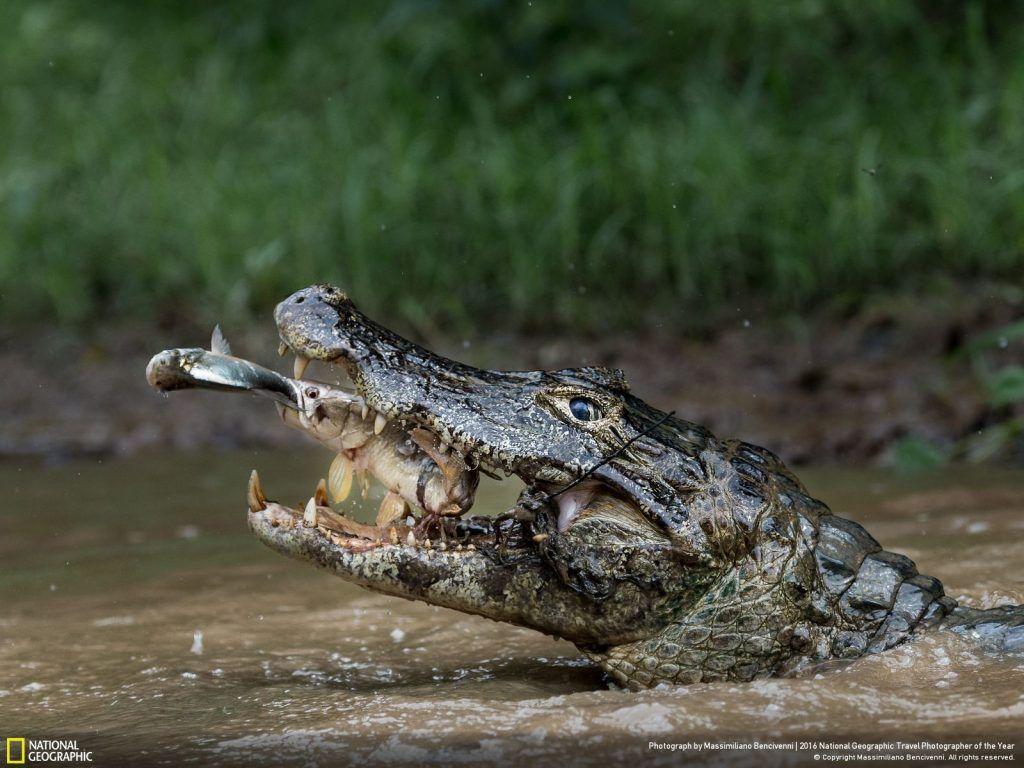 Foto de Massimiliano Bencivenni/National Geographic.