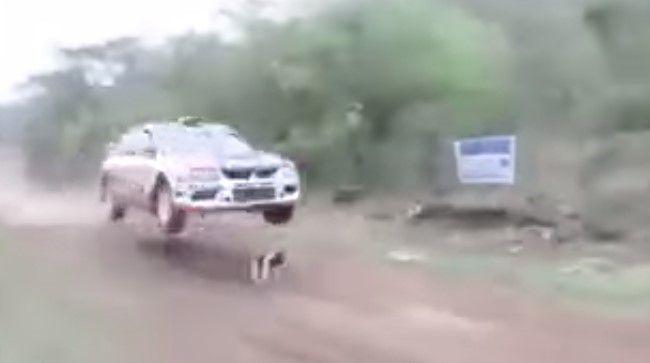 Video: perro a punto de ser atropellado en un Rally - Foto de Internet