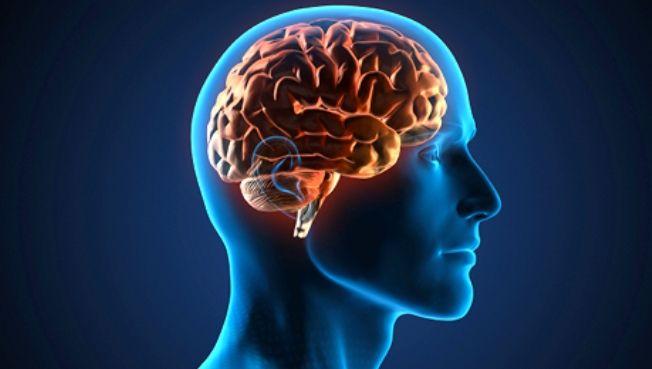 Un mito que los humanos solo usan el 10 por ciento del cerebro