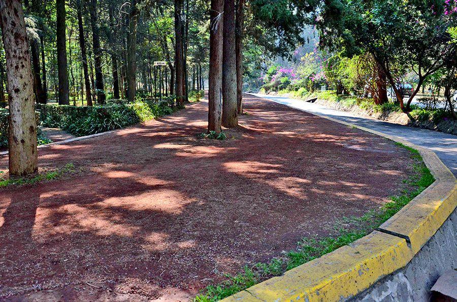 Atacan a corredora en el Bosque de Tlalpan