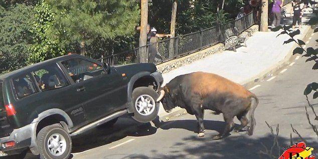Video: toro destroza camioneta en festival en España