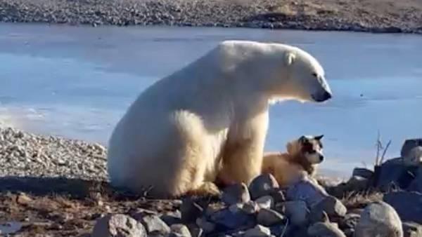 El final del video del oso que acarició a un perro