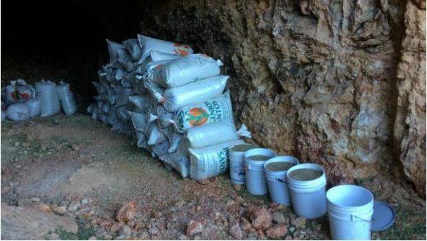 Ejército asegura 7 toneladas de mariguana en Sonora