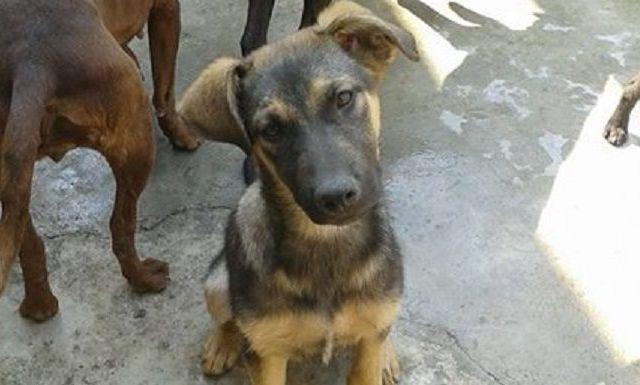 ¿Cómo adoptar un perro en la Ciudad de México? - Foto de Albergue San Cristobal