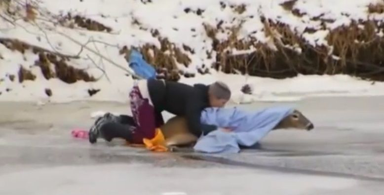 #Viral Rescatan a venado atrapado en lago congelado