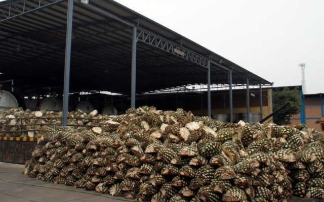 Clausuran destiladora de tequila en Jalisco por mal manejo de residuos - Foto de Internet