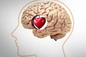 Sentimiento de amor se origina en el cerebro, no en el corazón
