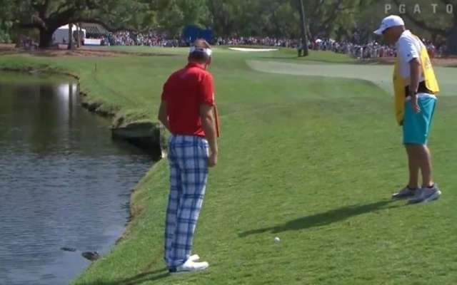 #Video Golfista realiza golpe con cocodrilo acechándolo