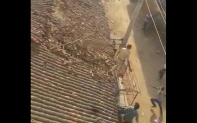 #Video Hombre salta desde techo para evitar ataque de leopardo