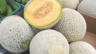 Crece producción de melón mexicano