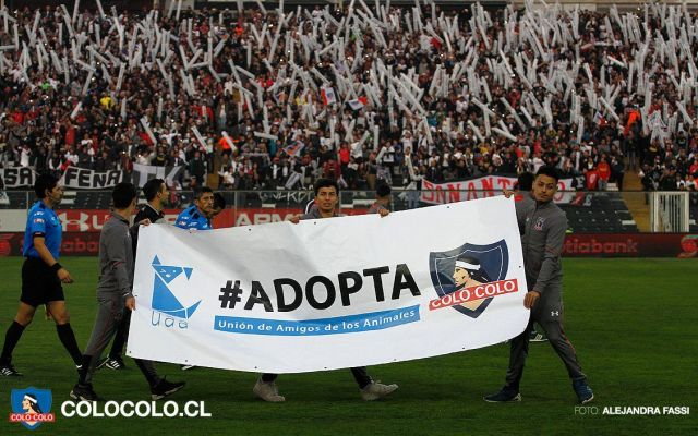 Colo Colo promueve la adopción de perros durante partido - Foto de Facebook Colo Colo