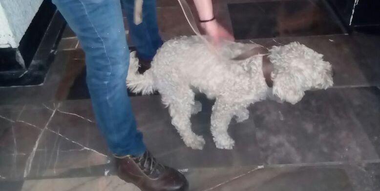 Rescatan a perro que caminaba en las vías del Metro Observatorio - Foto de @MetroCDMX