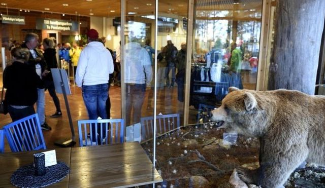 Oso mata a cuidador de zoológico en Suecia