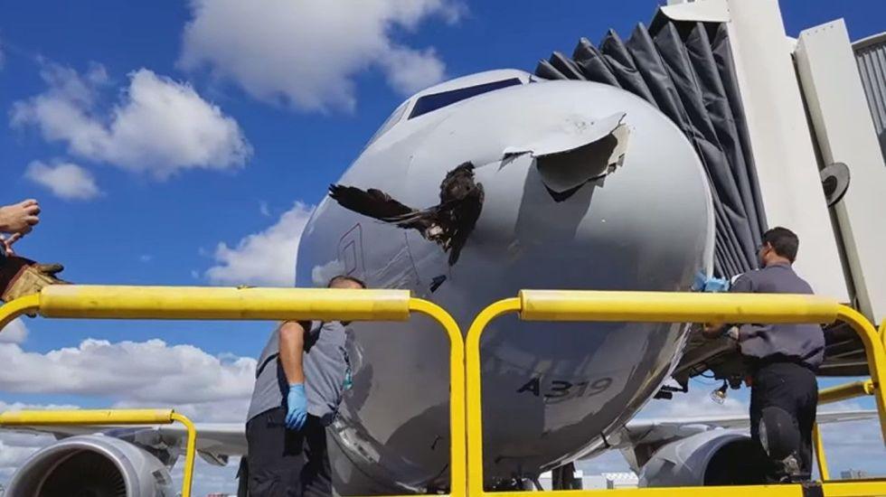 #Video Ave se estrella con nariz de avión tras aterrizar en Florida - Captura de Pantalla