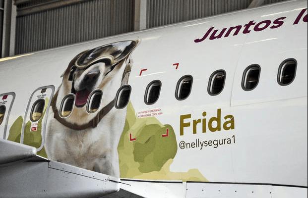 Volaris homenajea a Frida la perra rescatista - Foto de Al Aire