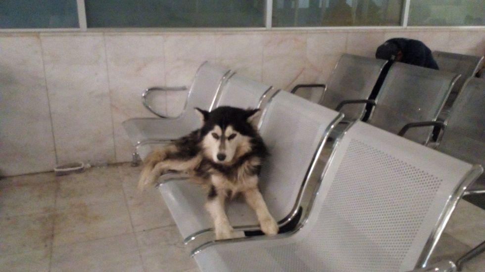 Perro espera a su dueño en hospital de Monterrey - Foto de Facebook