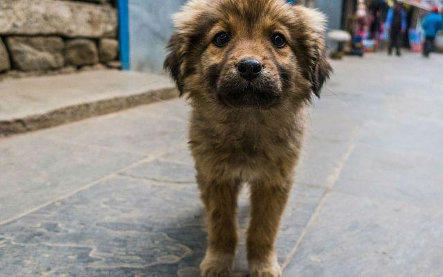 Denuncian matanza de perros callejeros en Rusia - Foto: Internet.