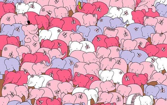 #RetoViral Encuentra el corazón entre los elefantes - Foto de Dudolf