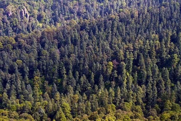 Michoacán pierde un tercio de sus bosques por cambio de uso de suelo - Foto de Quadratín