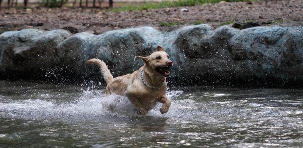 Secuestro de perros, otra manera de extorsión