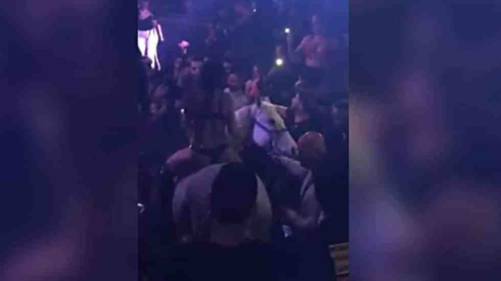 #VIDEO Exhiben a caballo en discoteca de Miami - Foto: @OfficialJoelF.
