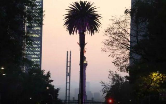 La historia de la Glorieta de la Palma en Paseo de la Reforma - Foto: Cuartoscuro.