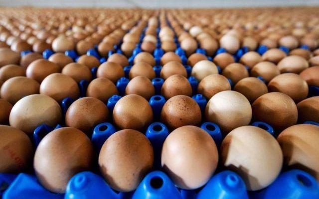 Retiran 200 millones de huevos en EE.UU. por salmonela - Foto de Internet