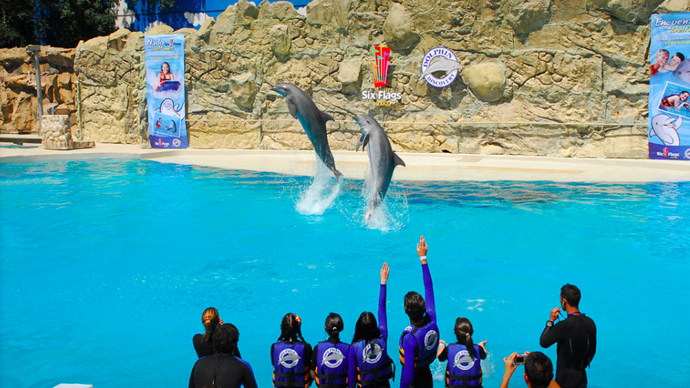 Adiós a delfines en espectáculos de la CDMX