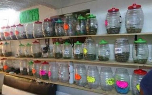 Es colonia Morelos zona de almacenamiento y distribución de drogas en la Ciudad de México - Foto de PGR