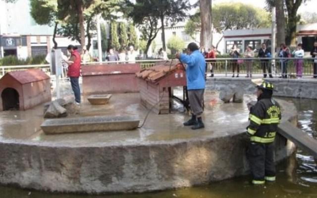 Perros callejeros devoran patos en Alameda de Toluca - Foto de Quadratín