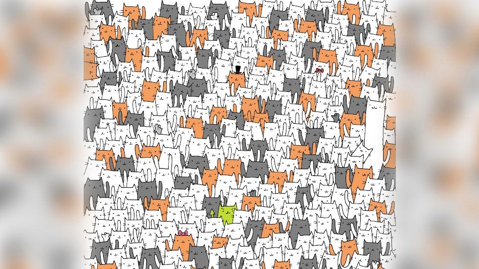 Reto viral: Encuentre al conejo infiltrado entre estos gatos - Foto de Dudolf