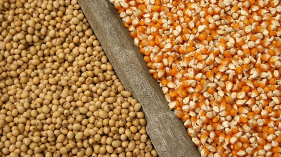 Mexico estudia imponer aranceles a maíz y soya de EE.UU. - Foto de Internet