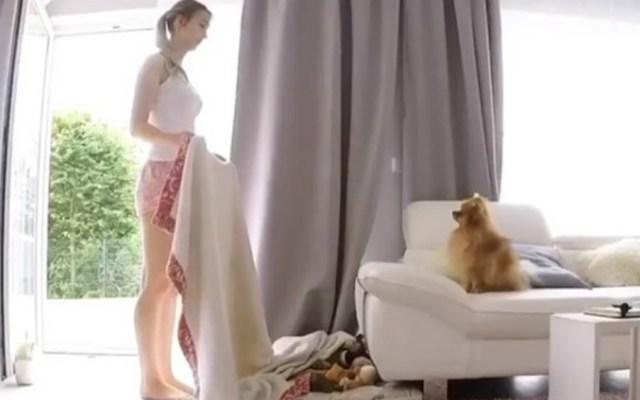El reto viral que volverá loco a tu perro - Foto de @cookiemalibu