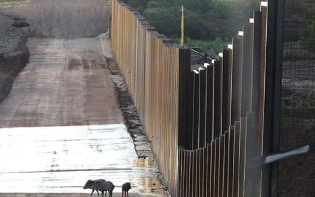 Advierten científicos amenazas a la biodiversidad por muro fronterizo - Foto de Defenders of Wildlife