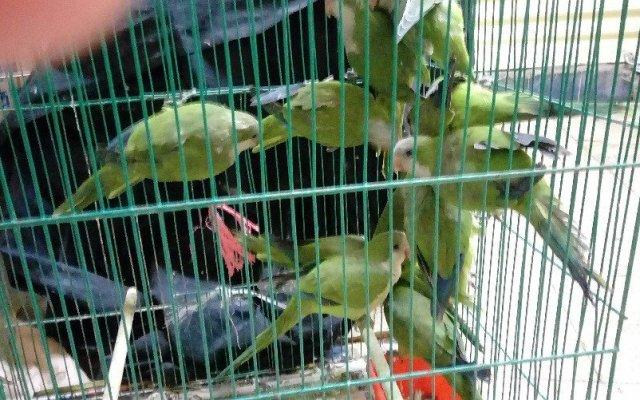 Rescatan a especies protegidas en el Mercado de Sonora - Foto de Twitter PGR