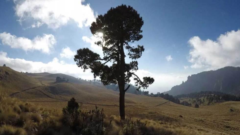 Celebran el Día del Árbol promoviendo la reforestación