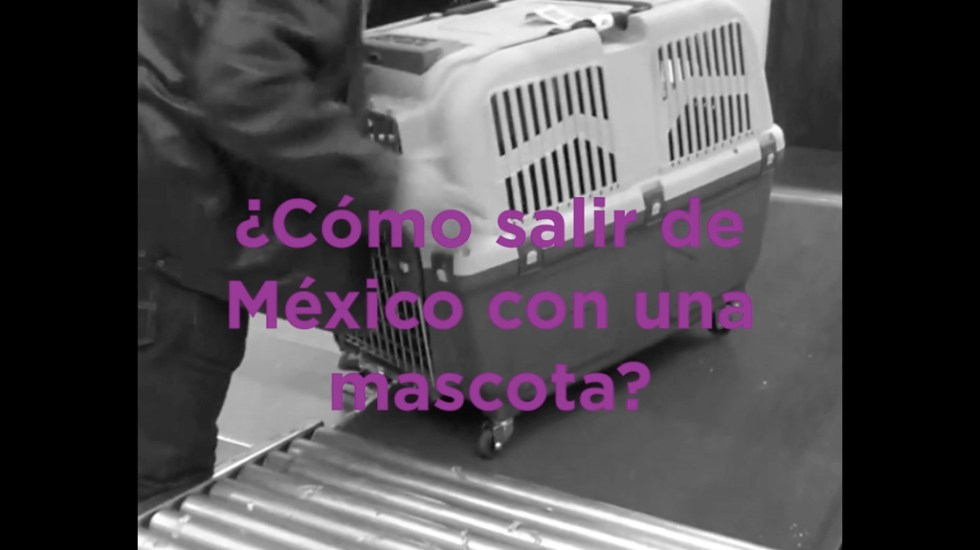 ¿Cómo salir de México con una mascota?