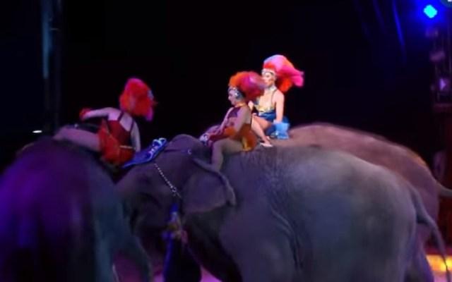 #Video Elefantes embisten a compañero en espectáculo circense - Foto de Captura de Pantalla