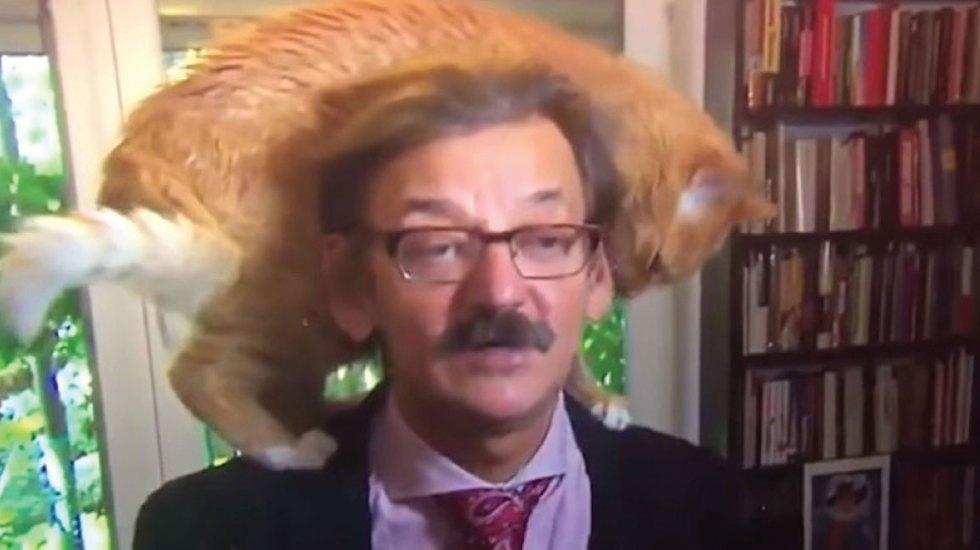 Gato irrumpe en entrevista a Jerzy Targalski y se roba la atención