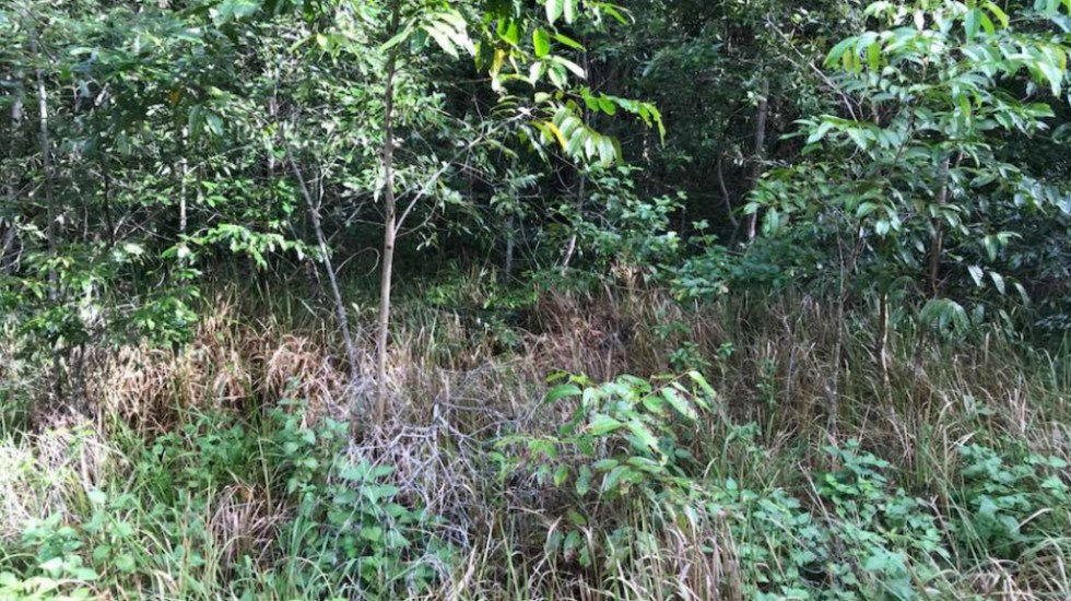 #RetoViral ¿Puedes encontrar la serpiente que se esconde en la maleza? - Foto deSunshine Coast Snake Catchers 24/7