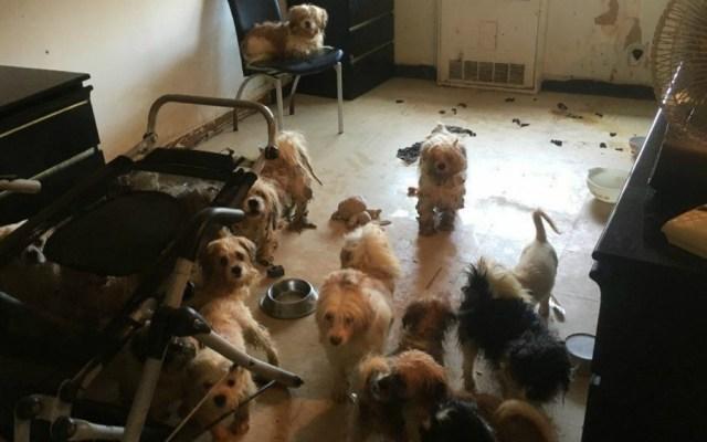Policías de Nueva York encuentran 33 perros maltratados en departamento - Foto de ASPCA
