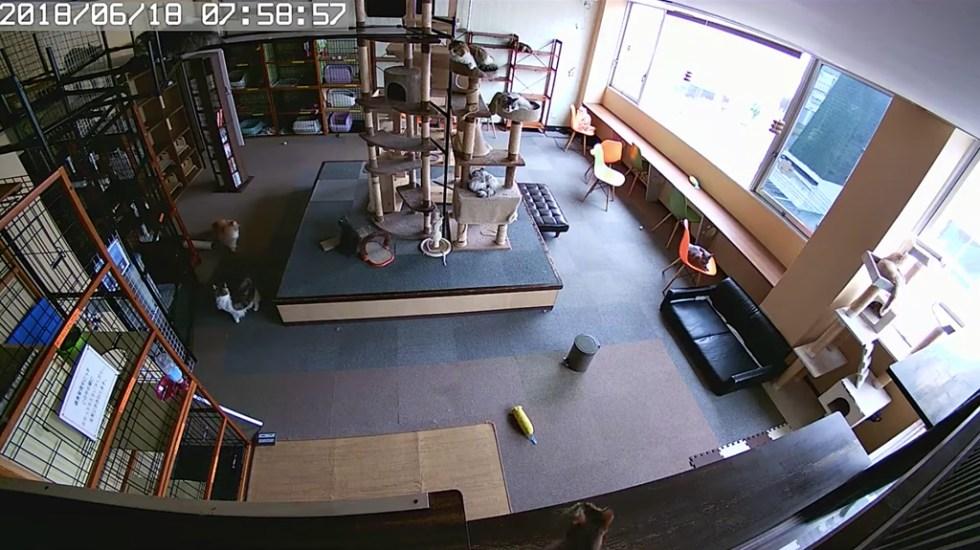 #Video Así reaccionaron gatos segundos antes de un sismo - Captura de pantalla