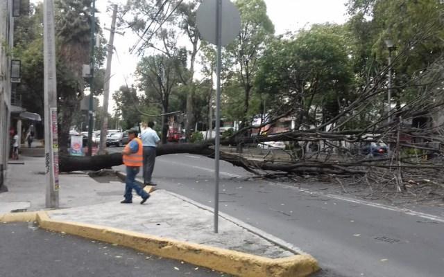#Video Árbol cae en calzada Taxqueña - Foto de Rafael Kros Eco @kroseco25