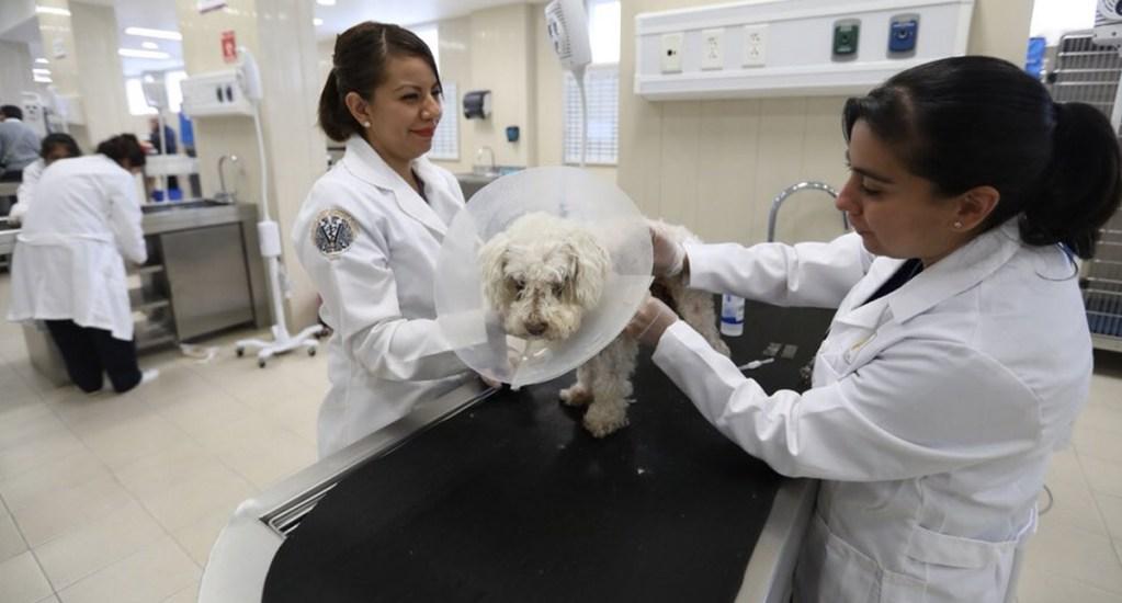 ¿Por qué se conmemora el Día del veterinario en México el 17 de agosto? - Foto de Gobierno de la Ciudad de México