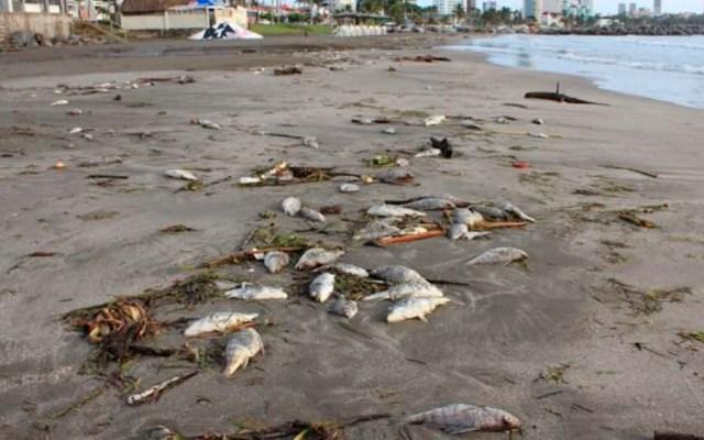 Aparecen peces muertos en playa de Veracruz - Foto de Quadratín