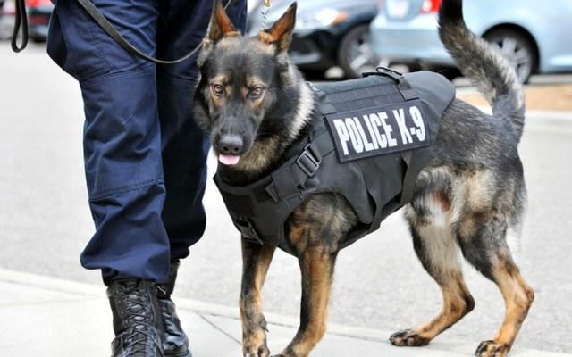 Perro policía muere tras ser dejado dentro de vehículo en Detroit