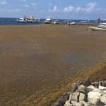 Preparan llegada de sargazo a Quintana Roo